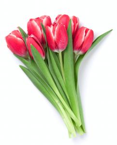 Agregar 6 Tulipanes Color variado a Caja