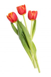 Agregar 3 Tulipanes Color variado a Caja